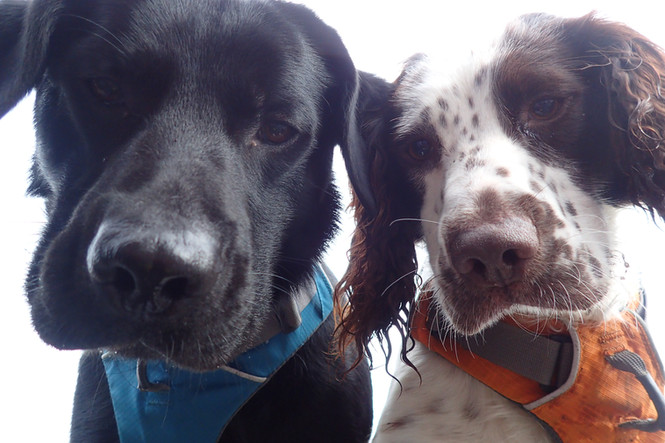 Lakeland Dog Walker, Professional Dog Walkers covering Cockermouth, Dearham, Brigham, Broughton Cross, Little Broughton, Great Broughton, Dovenby and Embleton, Cumbria.  We enjoy walking the fells, woodlands and round the lakes in the Cumbrian Lake District. We offer professional dog walking from 30mins to a full day as well as pet pop ins and socialisation sessions.