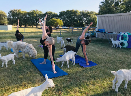 Downward dog?  It's Scapegoat Yoga