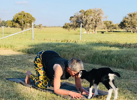 Goat Yoga in Boyanup