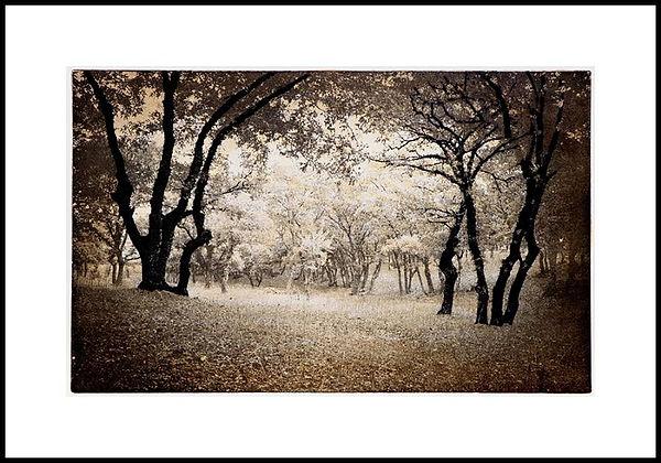 george-grove.jpg