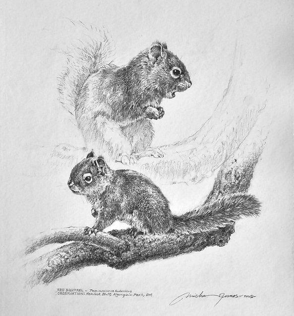 Red Squirrel_M Dumas.jpg