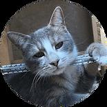 круг_кошки