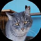 помощь_кошки.png
