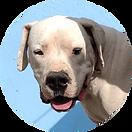 помощь_собаки.png