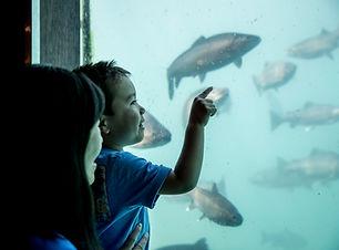 Kjet underwater observatory.jpg
