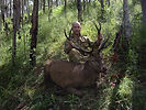 RIDGE Group deer hunting QLD