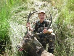 Ian Fox's cull stag