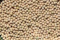 Pedigree Yellow Pea Seeds at Townview Seeds Ltd.