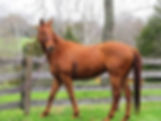 Thoroughbred Adoption Kentucky