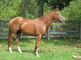 Horse Adoption Kentucky