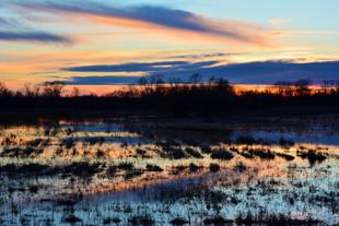 Pastel Wetland Sunset