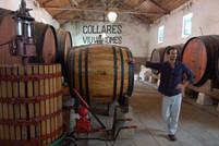 Colares: a Unique Wine in Portugal!