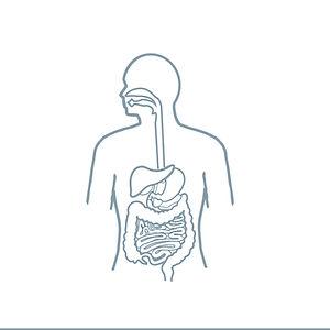 Digestive_System%20(3)_edited.jpg