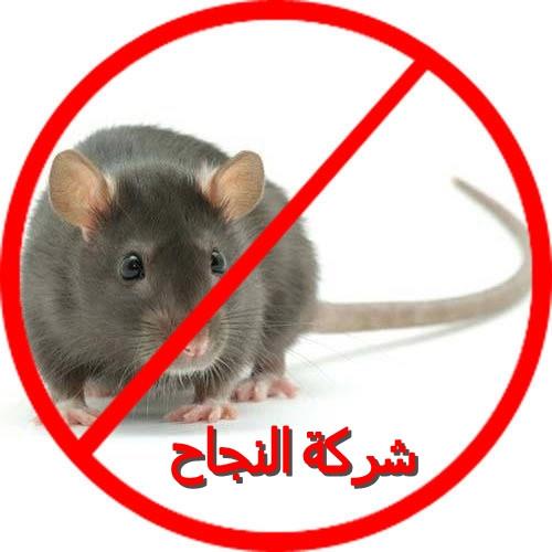 شركة النجاح لمكافحة الفئران بالرياض