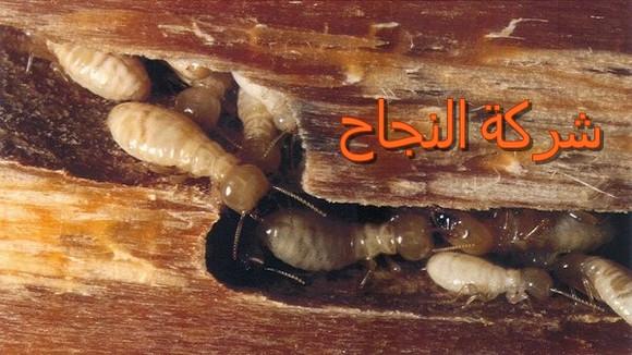 شركة النجاح لمكافحة النمل الأبيض بالرياض