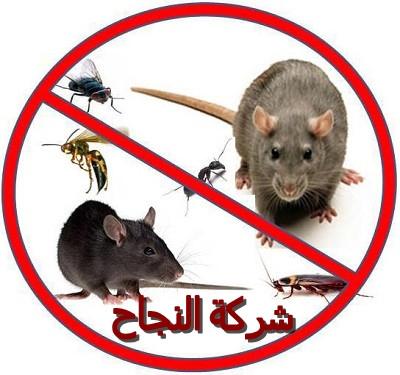 شركة النجاح لمكافحة حشرات بالرياض