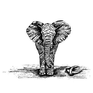 elephant illustration.png