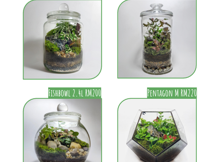 16 or 23 August 20: Closed Terrarium Workshop