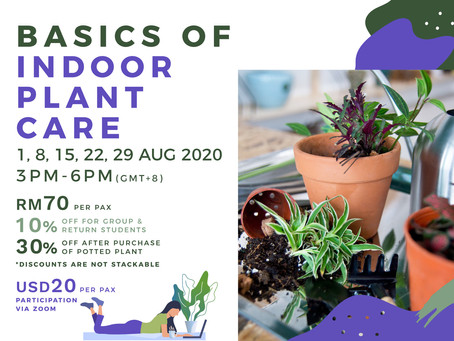 1, 8, 15, 22 or 29 August 20: Basics Of Indoor Plant Care