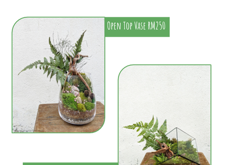 2 or 9 August 20: Preserved Terrarium Workshop