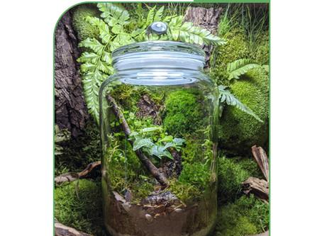 4 or 11 October 20: Bioactive Moss Wall Terrarium Workshop