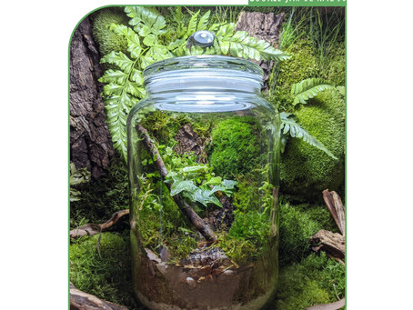 4 or 11 October 20: Bioactive Moss Wall Terrarium Workshop