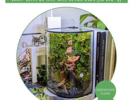30 May 21: Moss Wall Terrariums For Beginners