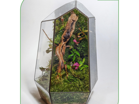 16 or 23 August 20: Moss Wall Terrarium Workshop