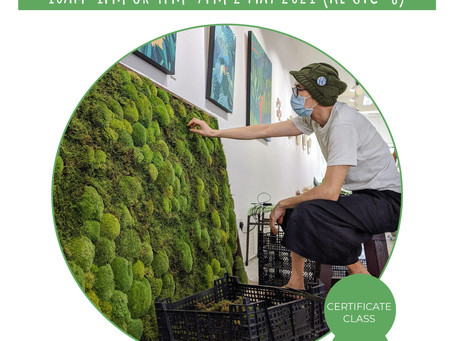 2 May 21: Preserving Moss & Making Moss Walls For Work Or Pleasure
