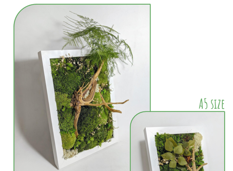 26 July 20: Preserved Moss Frame Workshop