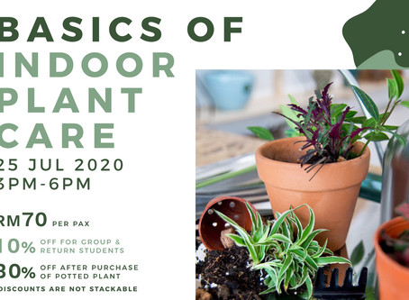 25 July 20: Basics Of Indoor Plant Care