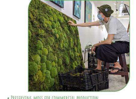 1 November 20: Professional Moss Preserving & Crafting
