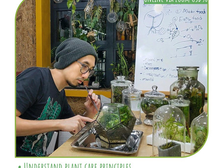 18 October 20: Closed Terrarium Care & Maintenance