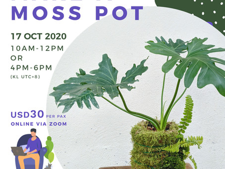 17 October 20: How To Make A Moss Pot