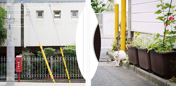 nishihiro-shota_3rd_naka.jpg