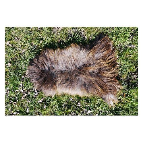 Schaf Fell (Heidschnucke)