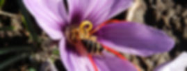 biene_safran-750x450.jpg