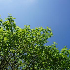 5月 新緑