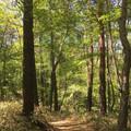 5月 森の小路