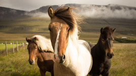 Why we stopped riding our horses