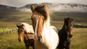 Roads and Horses - An Analogy for Hyper-Personalisation Adoption