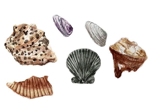 Set of 5 Cards  |  Unique Shells