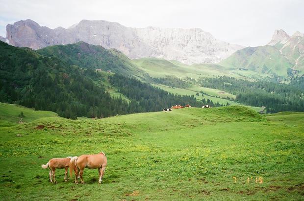 Wild Horses | Dolomites II