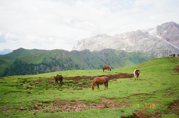 Wild Horses | Dolomites I