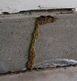 termite tube.jpg