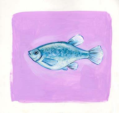 Lilac Killifish