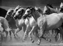 Koně- v řadě výběh