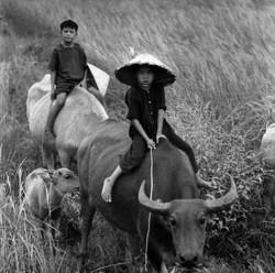 Vietnam (9)