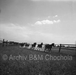 Koně - výběh 1953 (323)