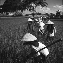 Vietnam (35)